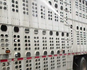 camion-lavado-jaulas